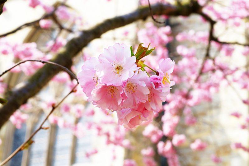 <span style='font-size: large;'>Frühlingswoche 2019 </span><br />Frühjahrsputz für die Seele